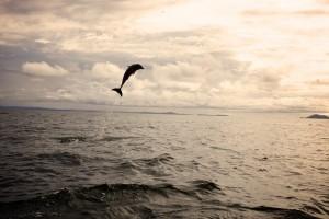 Coiba Panama Snorkel Trips