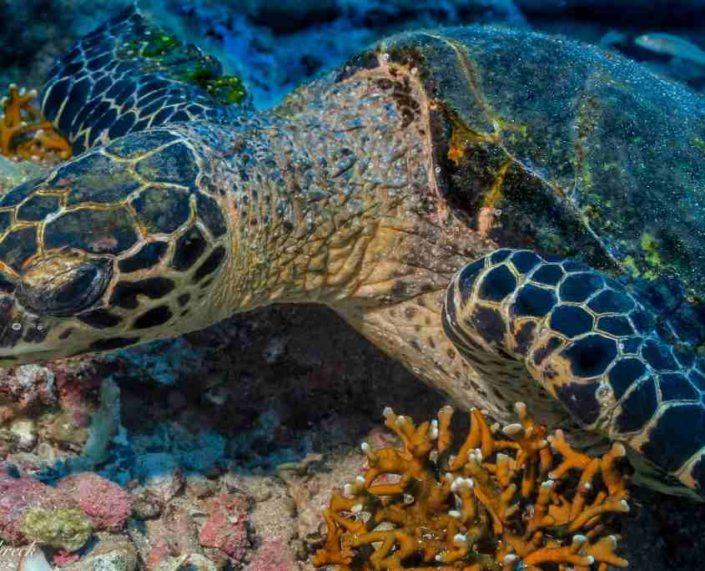 Panama Dive Center Sea Turtle