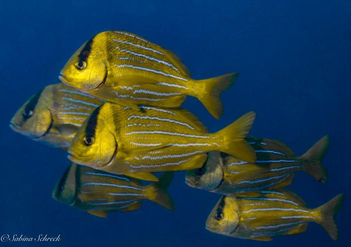 Panama Scuba Diving