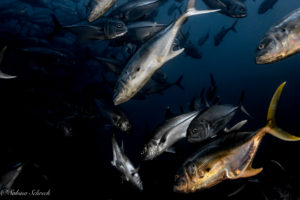panama-scuba-diving