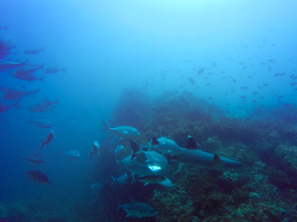 diving-panama