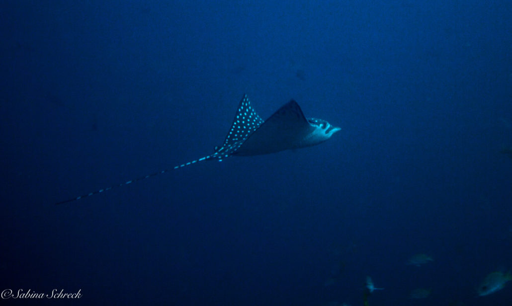 diving-isla-coiba