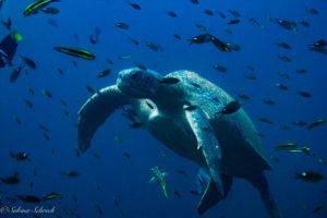 scuba-diving-panama